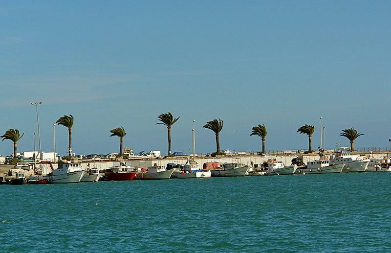 Palm trees during the wind in a port of Imperia