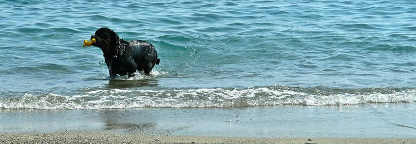 Dog beaches in Liguria