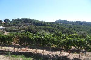 Cascina Praié Wine Growers in Liguria