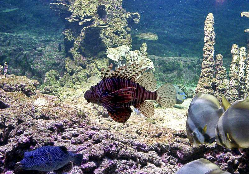 Een kleurrijke vis in het Aquarium van Genua