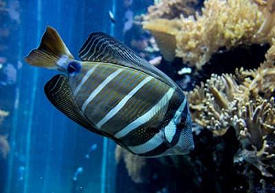 The second biggest Aquarium in Europe - Aquarium of Genoa is worth visiting in Liguria