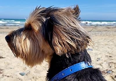 A dog is enjoying the sun in the sandy beach in Liguria