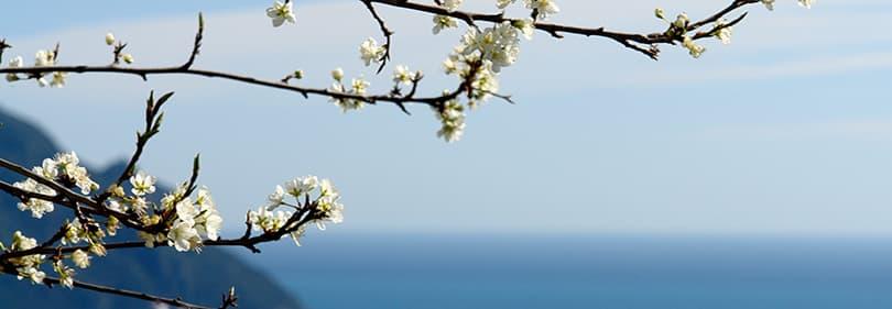 Frühling in Ligurien, Italien