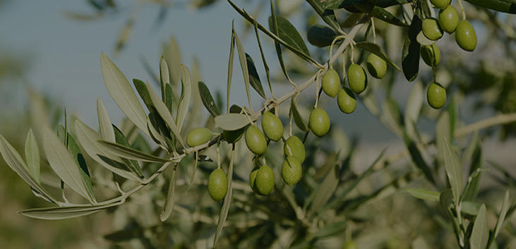 Try ligurian olive oil and other local specialties