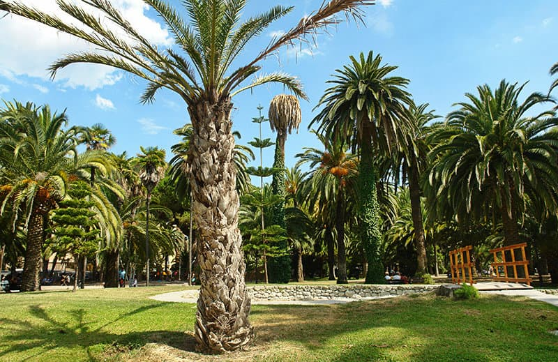 A park with palm trees in the town center of Ventimiglia
