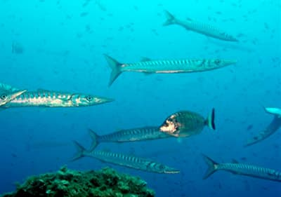 Fishes are swimming underwater in Liguria