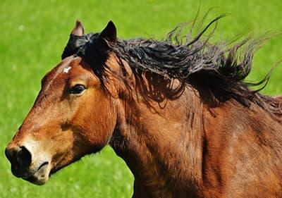 A beautiful horse in Liguria