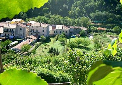 Wine growers in Feglino, Liguria