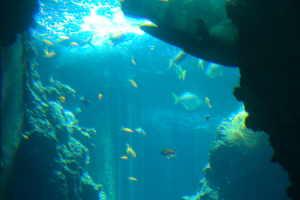 Centro Immersioni Delfino Diving centres in Liguria
