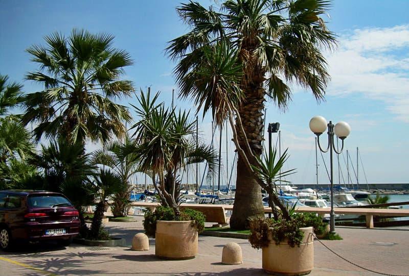 Palm trees next to a port in San Bartolomeo al Mare