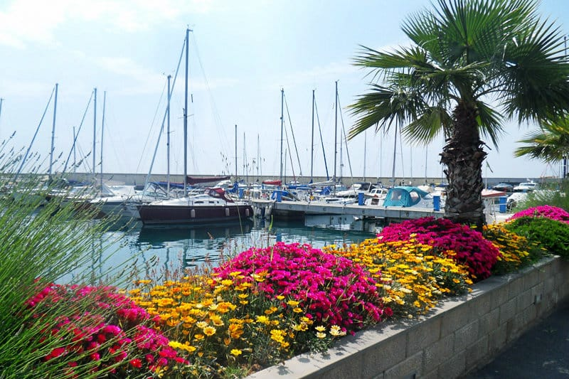 Colorful flowers next to a port of San Lorenzo al Mare