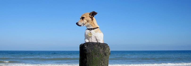 A dog is enjoying the beach in Liguria