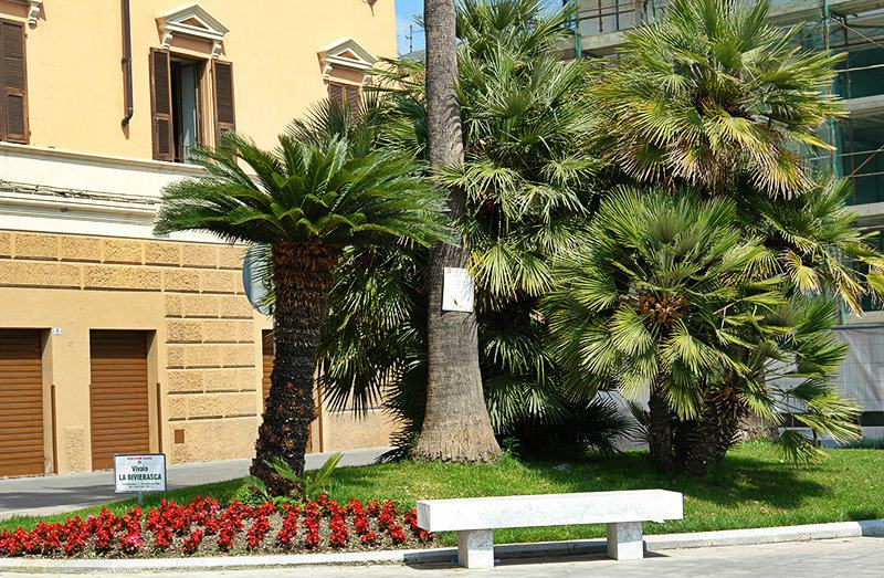 A square with palm trees in Imperia Oneglia