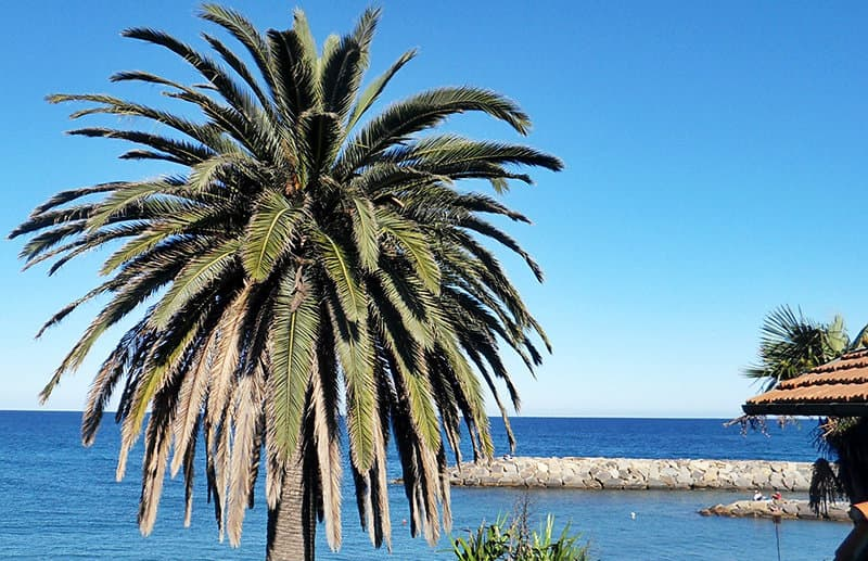 A palm tree next to the sea in San Lorenzo al Mare