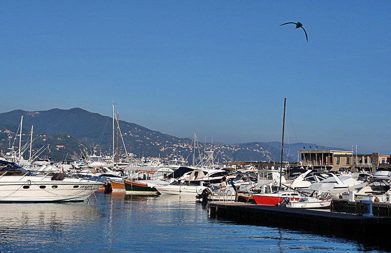 A port in Santa Margherita Ligure
